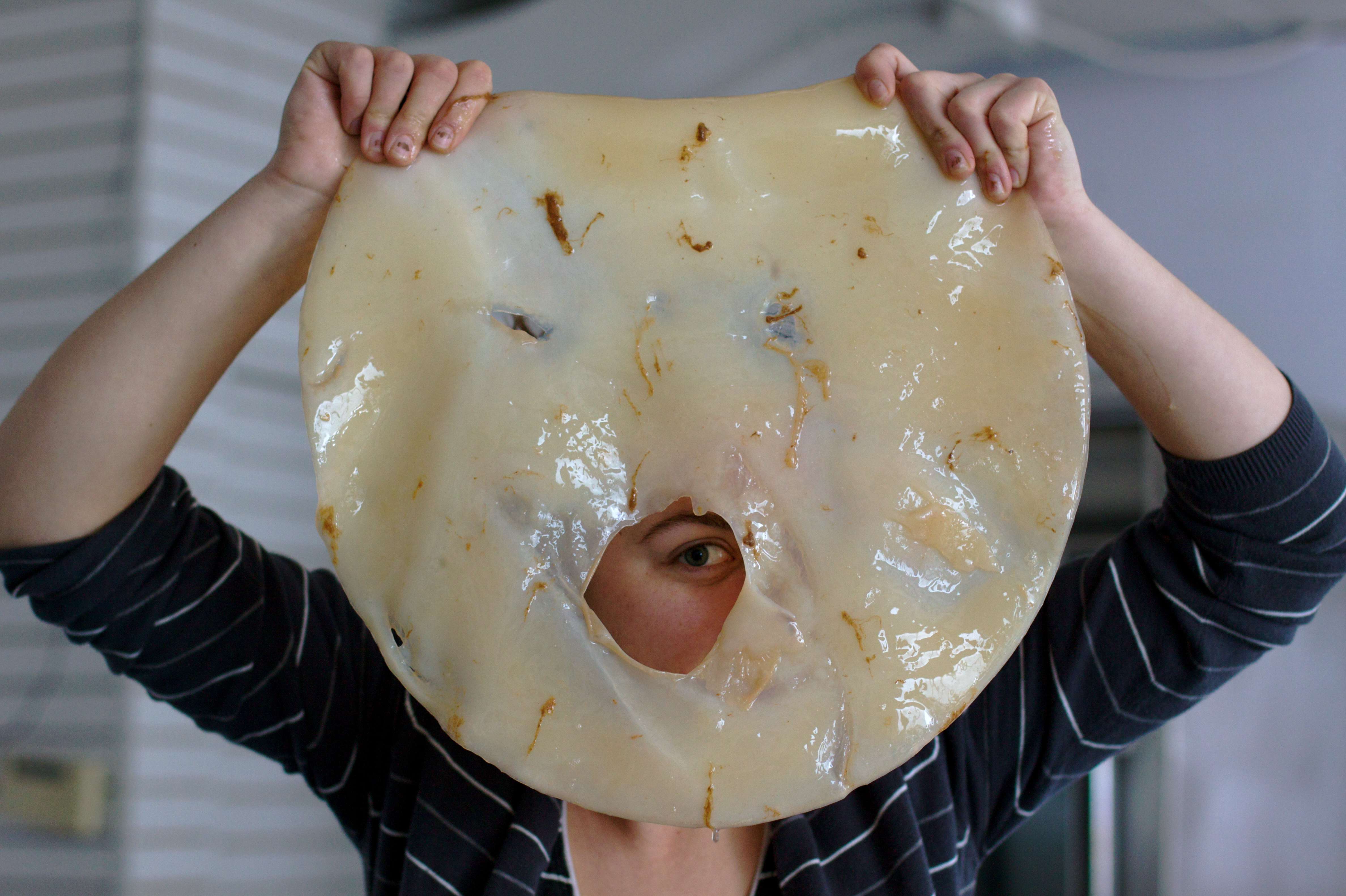 how to grow scoby from kombucha